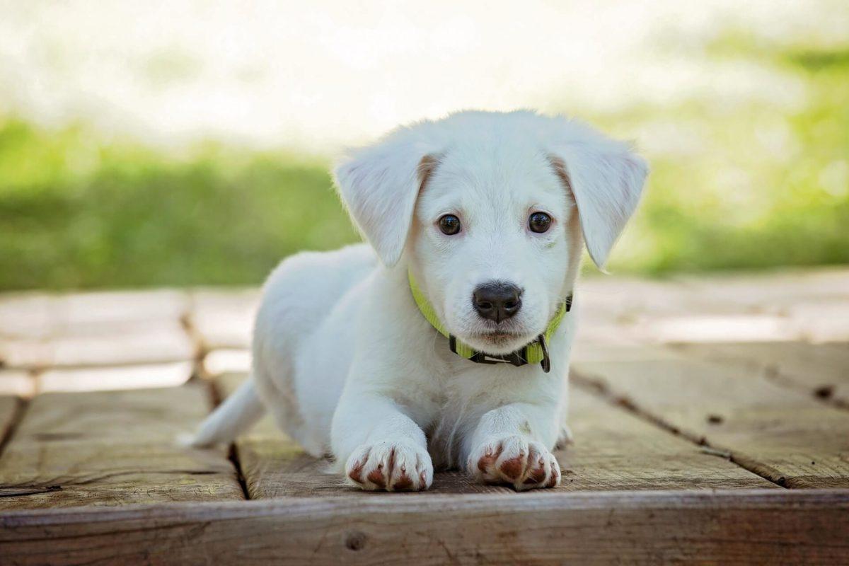 Crate Training a Puppy - Joyful Dogs of Michigan