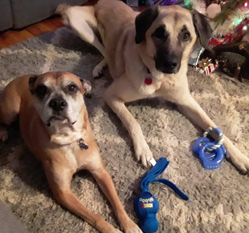 Choosing_a_Good_Dog_Trainer