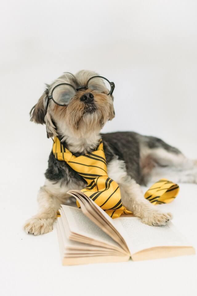 Puppies_Bite_Joyful_Dogs_of_Michigan_04