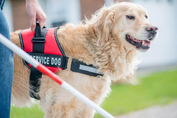 Service_Animal_Joyful_Dogs_Indiana